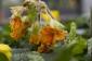 Pflanzen mit Frostschäden zurückschneiden – und abwarten