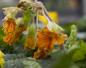 Pflanzen mit Frostschäden zurückschneiden - und abwarten